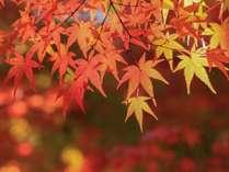11月中旬~12月初旬は紅葉狩りにぴったり☆夜間拝観を行う寺社仏閣も多いので1日中楽しめます。