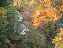 *【儚い紅葉】部屋からも、天竜川とともに紅葉をご覧いただけます。