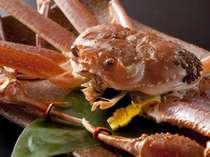 [越前蟹]年に一度の贅沢!冬の味覚の王様を食す。