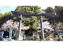 ~春~戸隠神社と満開の桜