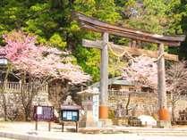 ■~春~戸隠神社と満開の桜