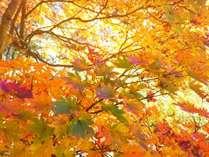 桃山風庭園 晩秋の紅葉