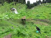 春のおすすめ山野草料理は、女将とたまに主人も食材確保に出向きます。