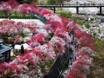 花桃と春のひととき