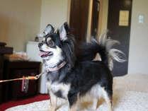 【ペットルーム36平米】わんちゃんと一緒に旅にでよう!5kg以内の小型室内犬限定のお部屋。