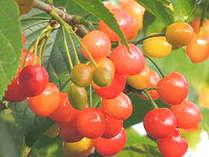 【アクティビティ付プラン♪】旬のもぎたて果物狩り!季節のフルーツを食べ放題★≪平日マイカー限定≫