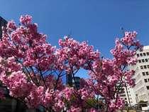 春さくら中央通り