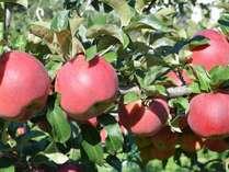 【期間限定】スタンダードプラン2食付+りんごの木のオーナー1本まるまるりんご狩り☆