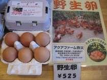 【売店】朝食バイキングで人気の野生卵☆健康放し飼いの美味しい卵 秩父市栃谷産です。
