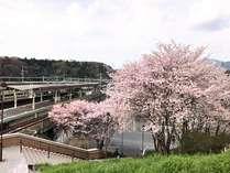 【花見】琵琶湖へお花見へGO!◇さくらの名所教えちゃいます『お花見』プラン◇素泊り