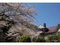 ログハウスからは桜に包まれた庭の全景が見渡せます!!