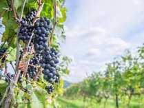 【山梨はワインの聖地】ワイナリー巡りプランもあります