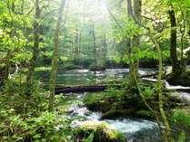 新緑が美しい奥入瀬渓流まで車で約5分。お薦めのカヌーを体験できるプランも有り!