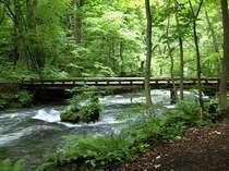 【5月平日限定!新緑満喫の季節&春の大還元プラン】新緑眩しい季節は十和田湖畔の極上温泉へ是非