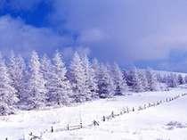 標高1500mだからこその「粉雪」車山高原は銀世界に包まれて。