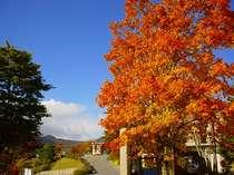 ホテルの紅葉風景