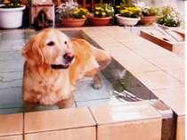 [写真]ペット専用露天風呂に皆で入ろう