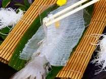 唐津名物「イカ活き造り」は新鮮でお刺身は透き通っています♪コリコリとした食感もやみつきに!