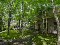40年間の時を経て育まれた苔と木々。Courtyard(中庭)は当館のシンボルです。