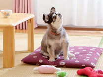 川添支店はペットも一緒に泊まれるお宿です♪