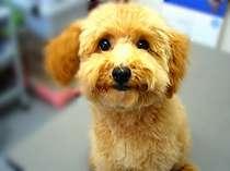 小型・室内犬★と一緒に宿泊出来ます♪