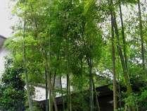 竹林の緑がお出迎えします。