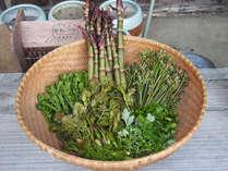 【5月限定】春爛漫♪♪≪旬の採れたて山菜づくし和膳≫山菜がなくなり次第終了の激レアプラン!