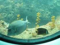 ファミリーおすすめ足摺海底館