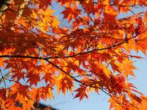 【紅葉イメージ】自然に囲まれた当館なら、ほっこりと紅葉が楽しめます♪