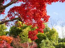 自然に囲まれた当館なら、ほっこりと紅葉が楽しめます♪