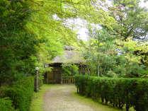 ・【景色】新緑の季節には散策が気持ちいいです。