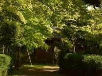 木漏れ日の中、のんびりと散策。京都市内とは思えない落ち着いたひとときを。