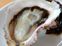 隠岐の島直送の岩牡蠣