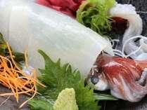 【隠岐島直送 白イカ】コリコリとした食感とほのかに広がる甘みが絶品♪