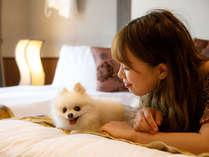 愛犬も安心して寛げるマナーベルトを無料でご用意しています!