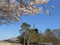 【春爛漫】奈良の桜を堪能☆観光拠点にぴったりの立地!目の前には興福寺の桜♪