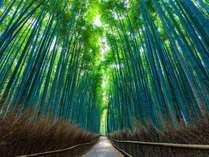 ◆嵐山:竹林の小径 ドラマやCMでもお馴染みの観光名所~≪ホテルより車で5分≫