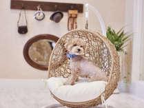 【屋内ドッグサロン】ミニ写真館のわんちゃん用小物で、普段も可愛いけど、さらに可愛く写真が撮れます♪