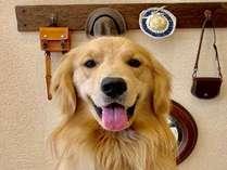 【看板犬(兼)コンシェルジュ支配人リアン】皆様のお越しをお待ちしております♪