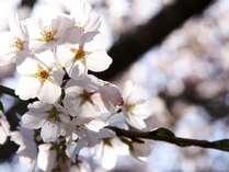 【期間限定】春を感じるお花見旅行♪うれしい特典つきでお得に宿泊