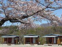 シーサイドライン沿いの丘の上、正面に日本海、後ろは弥彦山♪春は海を見ながら花見ができます!