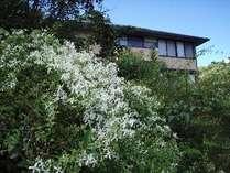 紀伊大島自生のツル性植物で見事なベールを造る。
