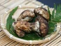 さぁ!松茸を食べに行こう♪松茸の産地「塩田平」での★松茸ランチ付き★