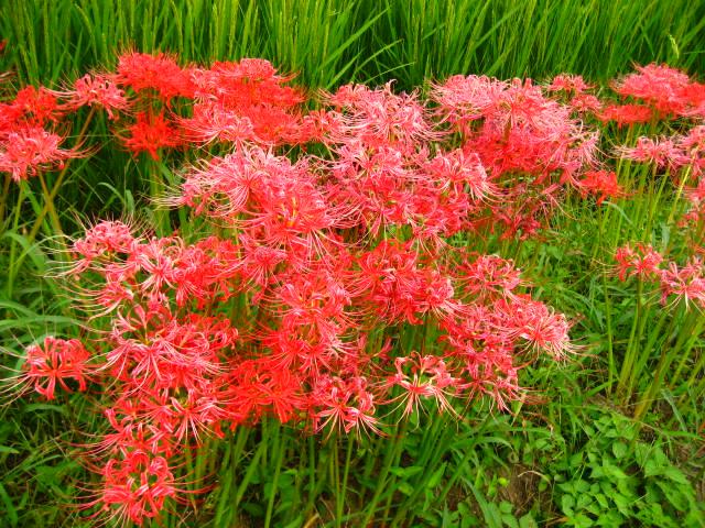 しんちゃんさんの奈良県の旅行記
