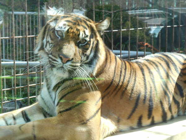動物園 名古屋