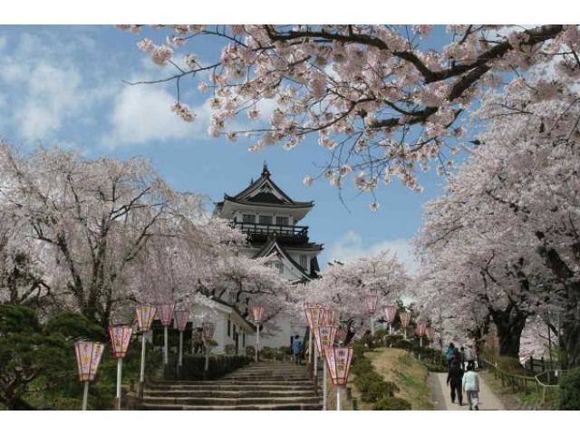 横手公園桜まつり
