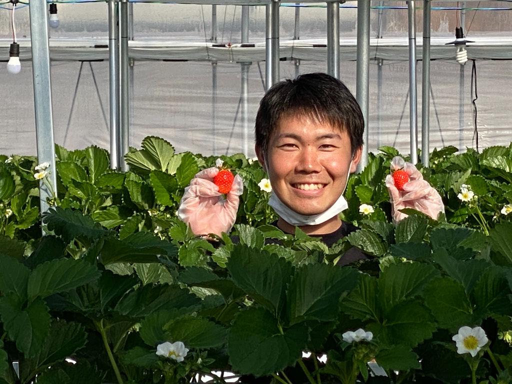 狩り 軽井沢 いちご 軽井沢でフルーツ狩りを経験してみませんか?体験できるスポットをご紹介