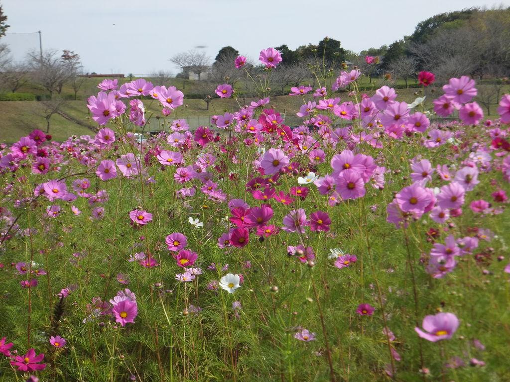 希望ヶ丘花の香る里