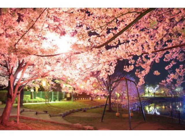 岩脇公園桜まつり