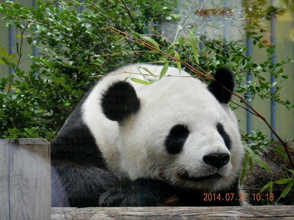 4位.上野動物園